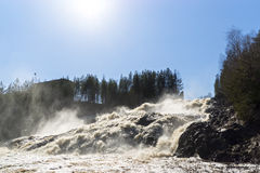 Sunny waterfall in pine forest Stock Images