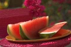 Sunny watermelon. Slices of watermelon royalty free stock photos
