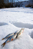 Sunny weather, deep snow and small fishes Royalty Free Stock Photo