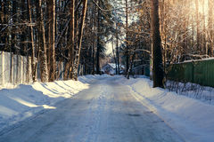 Sunny weather in forest. Winter sunny weather in forest Royalty Free Stock Photos