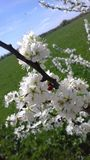 Sunny weather Royalty Free Stock Photo