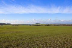 Sunny wheat fields Stock Photography