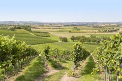 Winegrowing scenery in Hohenlohe. Sunny winegrowing scenery in Hohenlohe, a area in Southern Germany at late summer time Royalty Free Stock Images