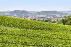 Winegrowing scenery in Hohenlohe. Sunny winegrowing scenery in Hohenlohe, a area in Southern Germany at late summer time Royalty Free Stock Photos