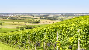 Winegrowing scenery in Hohenlohe. Sunny winegrowing scenery in Hohenlohe, a area in Southern Germany at late summer time Stock Photography