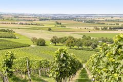 Winegrowing scenery in Hohenlohe. Sunny winegrowing scenery in Hohenlohe, a area in Southern Germany at late summer time Stock Images