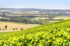 Winegrowing scenery in Hohenlohe. Sunny winegrowing scenery in Hohenlohe, a area in Southern Germany at late summer time Royalty Free Stock Image