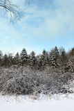 Sunny winter. Forest under the snow in winter a sunny cold day royalty free stock photo