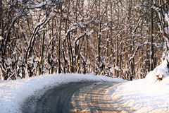 Sunny winter. Forest under the snow in winter a sunny cold day royalty free stock image