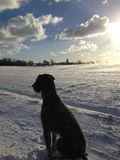 Dog in sunny winter contemplation Stock Image