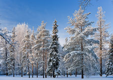 Sunny winter day Royalty Free Stock Photos
