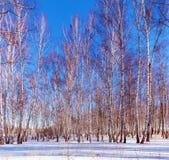 Sunny Winter Day en el bosque Imagenes de archivo