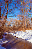Sunny Winter Day at Forest Stock Photo