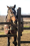 Sunny winter day on a horse farm Stock Images