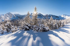 Sunny winter day in the mountain forest Stock Photography