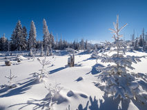 Sunny winter day in the mountain forest Stock Photos