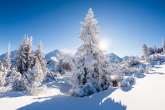 Sunny winter day in the mountain forest Stock Images
