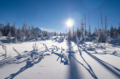Sunny winter day in the mountain forest Royalty Free Stock Images