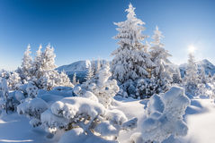 Sunny winter day in the mountain forest Royalty Free Stock Photo