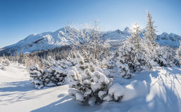 Sunny winter day in the mountains Stock Photos
