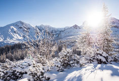 Sunny winter day in the mountains Royalty Free Stock Photo