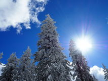 Sunny winter weather, snow on trees in forrest, blue sky during skiing in Alps mountines stock photos