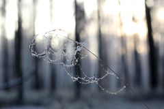 Sunny winter day. Rime on a spider's web Royalty Free Stock Photos