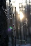 Sunny winter day Royalty Free Stock Image