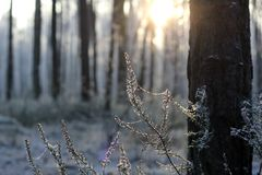 Sunny winter day. Rime on a spider's web Stock Photos