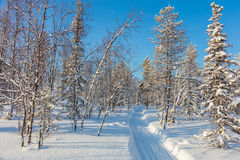 Sunny winter day in snowy forest with empty skiing trail Stock Photo