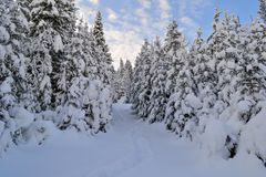 Winter spruces forest in the Ural Mountains, Russia, Chelyabinsk region, Minyar. Pushkin`s fairy tal. Sunny winter day in the Ural Mountains, Russia Chelyabinsk Royalty Free Stock Image