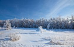 Sunny winter day - winter forest. Stock Image
