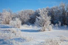 Sunny winter day - winter forest. Russia. Royalty Free Stock Photography