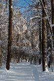 Sunny winter day in the wood covered with snow Royalty Free Stock Images