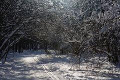 Sunny winter day in the wood covered with snow Royalty Free Stock Photos