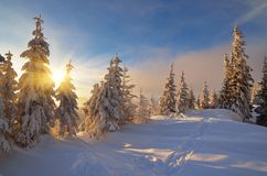 Sunny winter evening Royalty Free Stock Photo