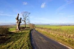 Sunny winter farming landscape Royalty Free Stock Image
