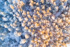 Sunny winter forest royalty free stock image