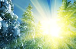 Sunny winter forest Royalty Free Stock Images