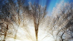 Sunny winter forest stock video