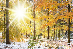 Sunny Winter Forest Scene Royalty Free Stock Photo
