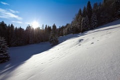 Sunny Winter Landscape Royalty Free Stock Photography