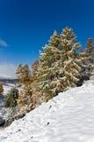 Sunny winter landscape Stock Image