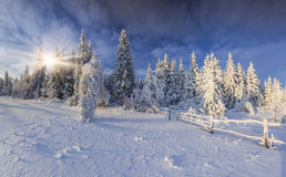 Sunny Winter Landscape stockfotos