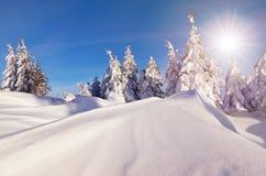 Sunny Winter Landscape imagem de stock