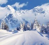 Sunny Winter Landscape Image stock