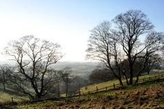 Sunny Winter Landscape Foto de archivo