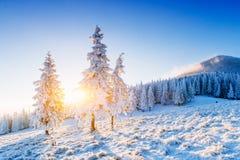 Sunny Winter Landscape Stockbilder