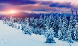 Sunny Winter Landscape Stockbild