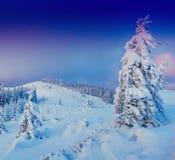 Sunny Winter Landscape Lizenzfreie Stockbilder